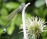 FotosRGES: th_Dragonfly2_NL_2006-KIH