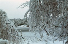 FotosRGES: th_Frost_on_trees_and_lake_NL_2001-KIH