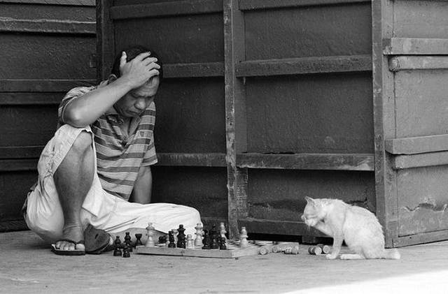 Man playing chess against cat