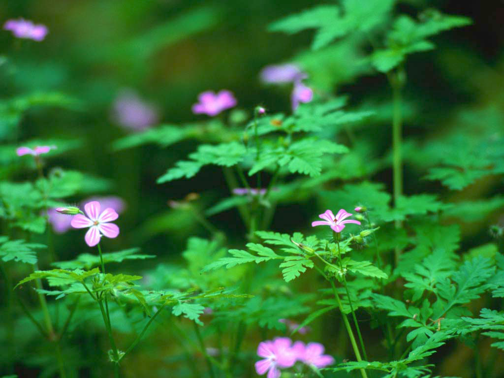 Forest flowers pink