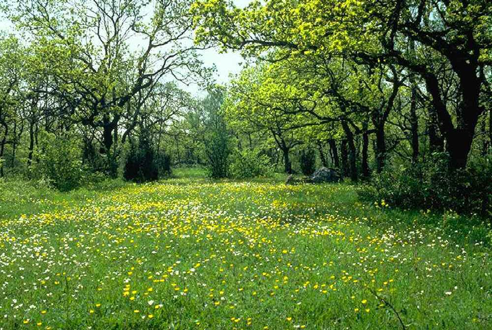 Forest meadow