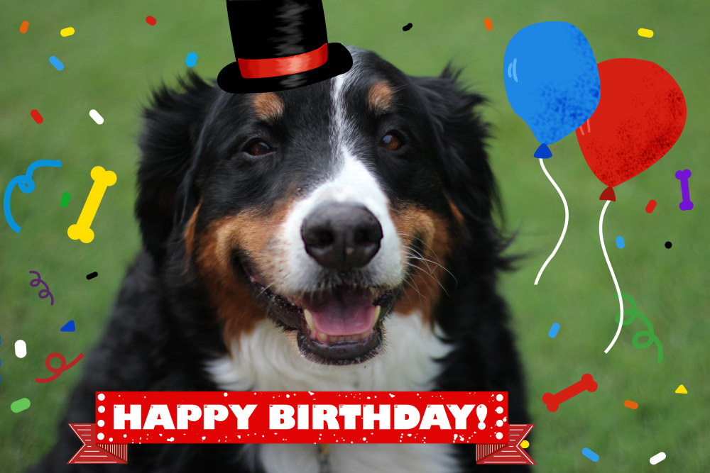 2 Full Scale Image Shown Of Berner Sennen Dog Says Happy Birthday