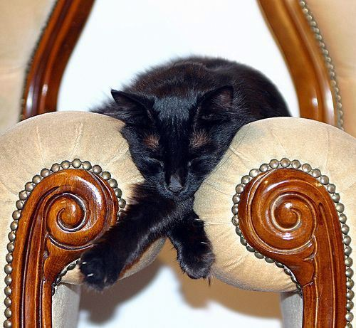 Cat sleeping between chairs