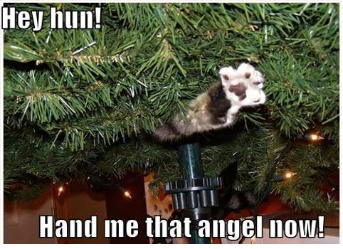Cat hand me that Christmas angel
