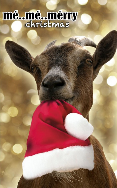 Goat with red Christmas hat   Me Me Merry Christmas