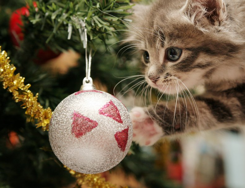 Kitten playing with Christmas ball