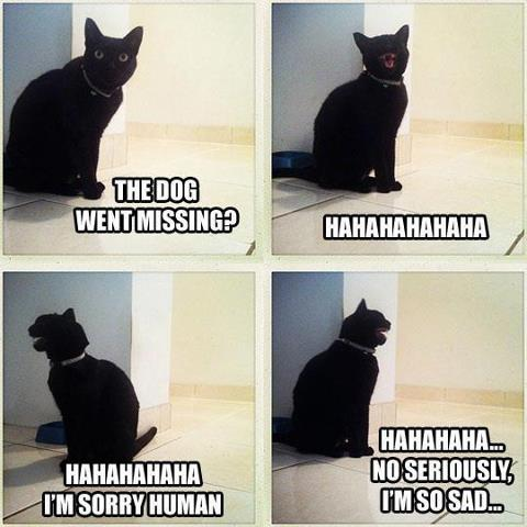 Cat laughing about dog went missing