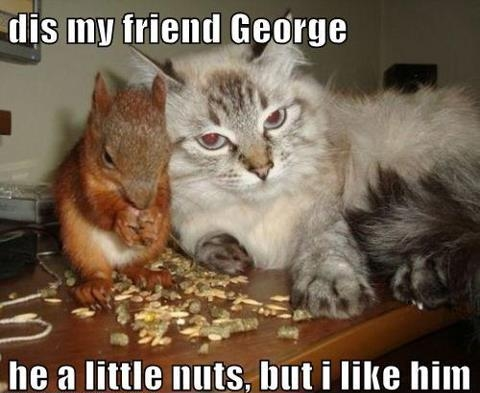 Cat with nutty squirrel George
