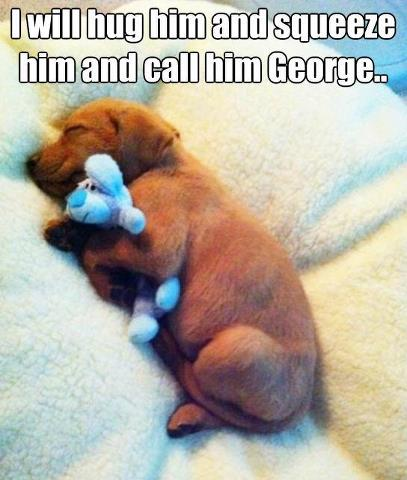 Puppy dog with George