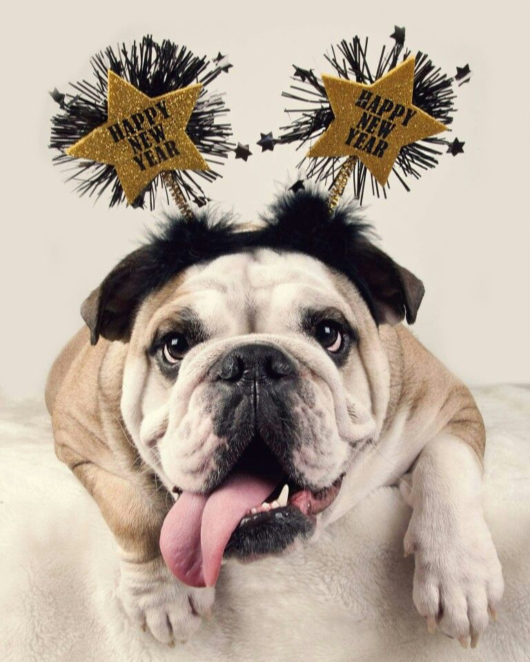 Bulldog   Happy New Year