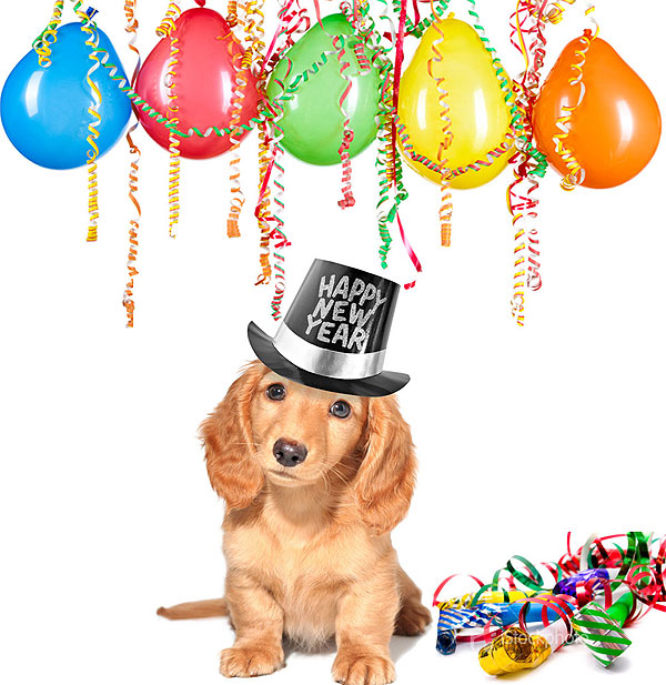 Dog   Happy New Year text