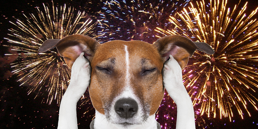 Dog holds paws against ears because of fireworks