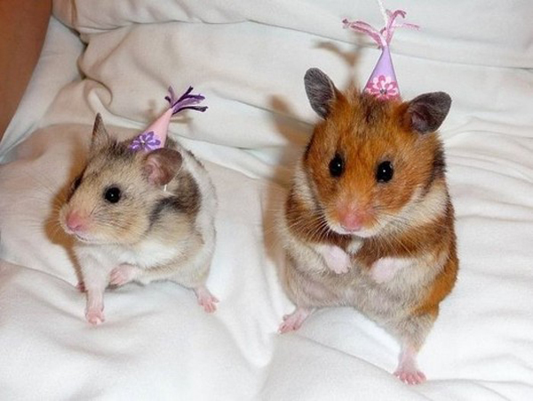 Hamster party on bed