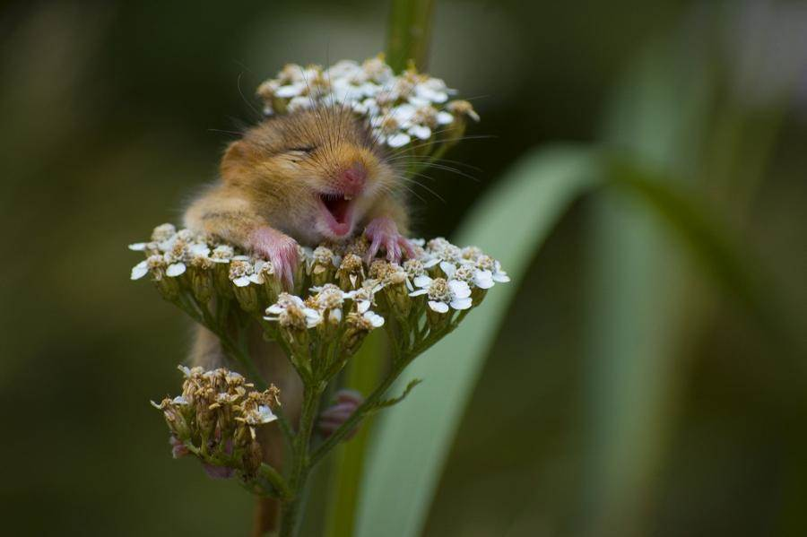 Mouse in flowering herb