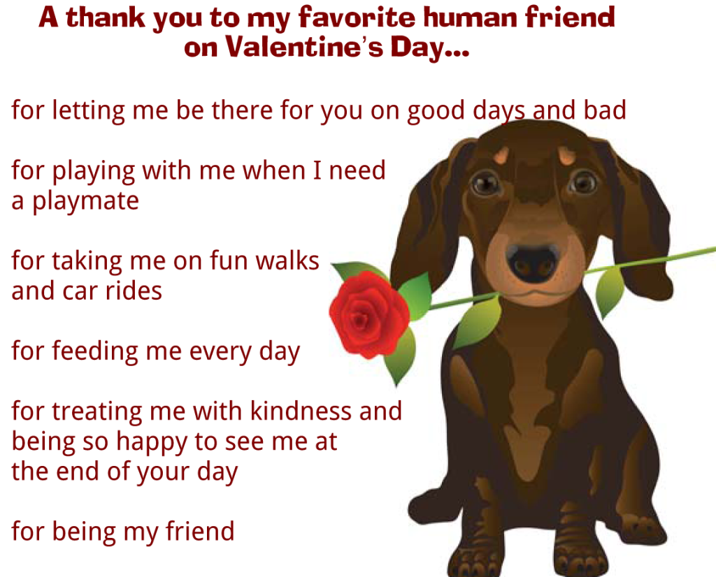 Dog   a Thank You to my favorite human Friend text