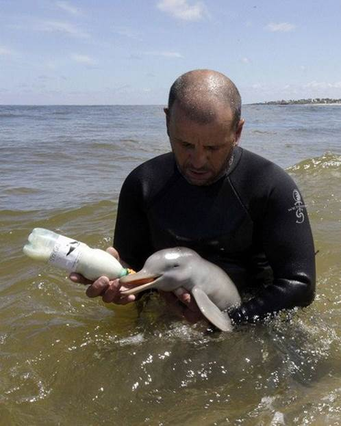 Man weans baby dolphin with bottle